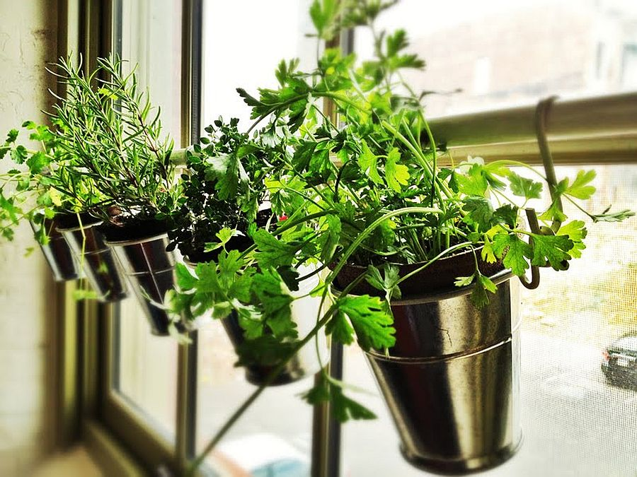 Turn your kitchen window sill into a space for the small herb garden