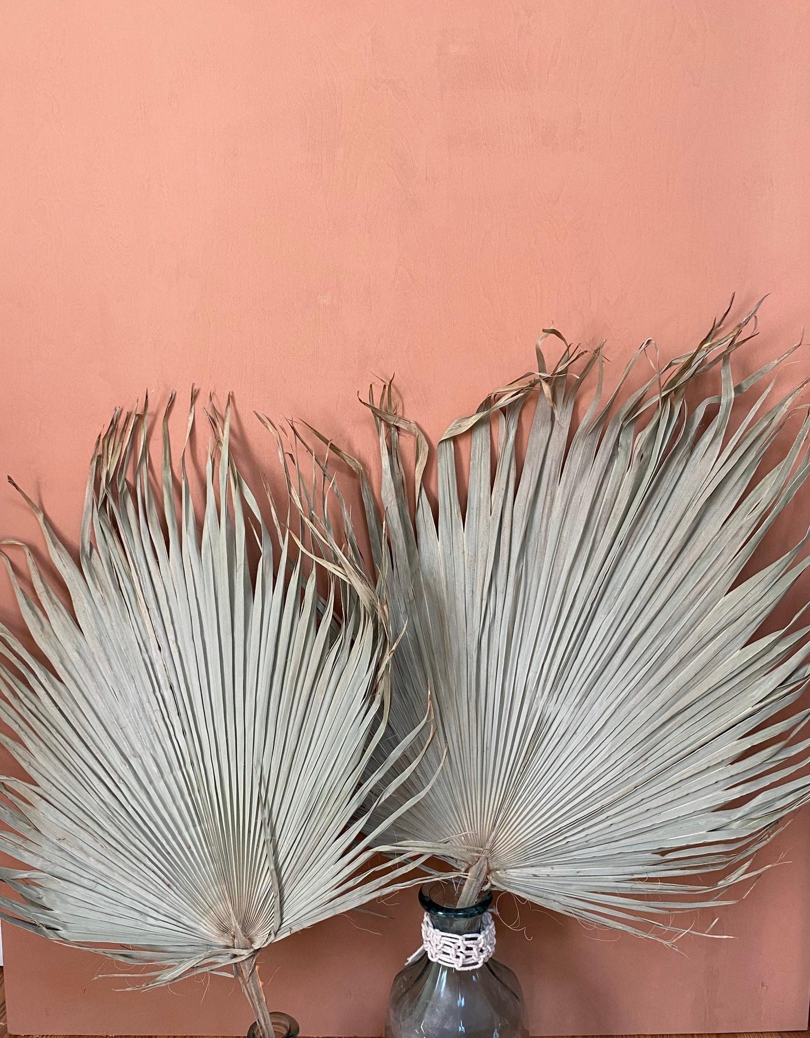 Dried fan palm leave from Bohemian Revival Shop