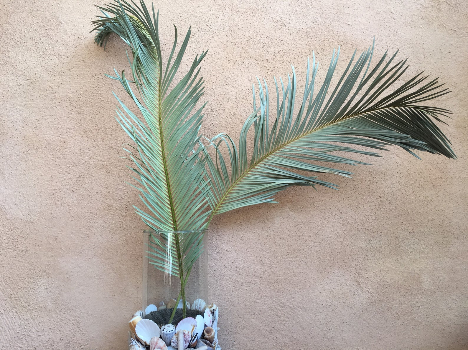Dried-sago-palm-leaves-from-Natural-Dried-Decor-45624