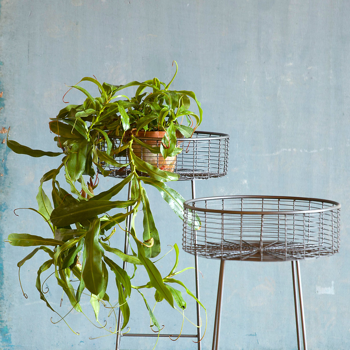 Wrought iron basket plant stand