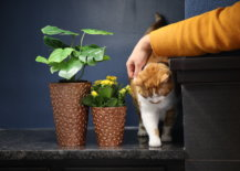 russell getting pets while standing with his copper planters