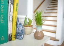 6 lowlight air plants