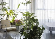 Wonderful-collection-of-indoor-plants-adds-freshness-to-the-apartment-interior-28646-217x155