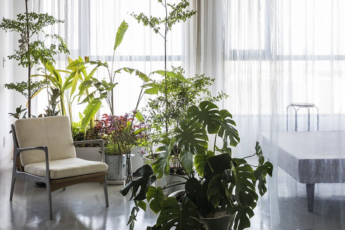 Wonderful collection of indoor plants adds freshness to the apartment interior
