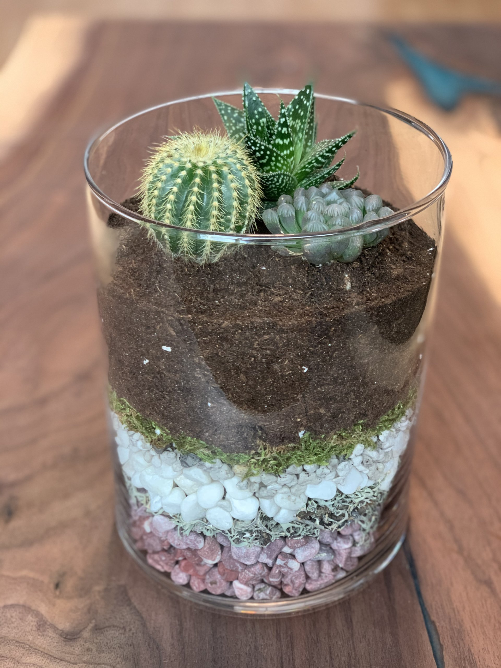 Assorted succulents in glass terrarium display