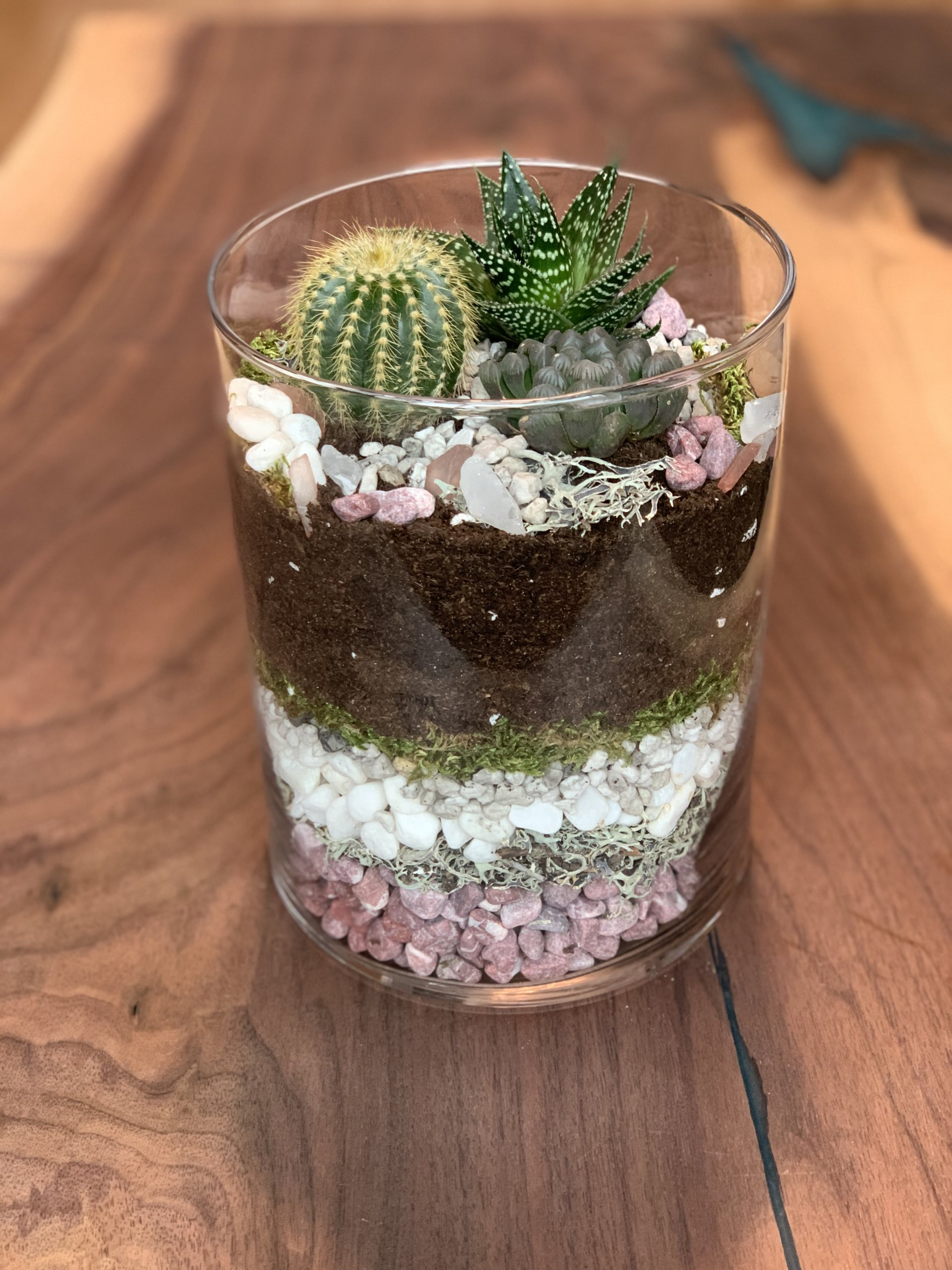 Decorative succulent terrarium display