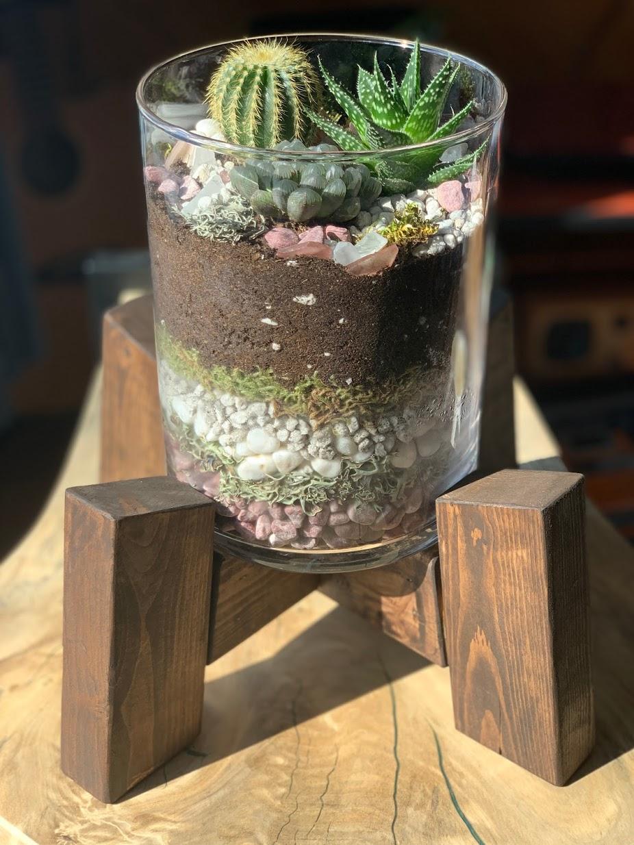 Modern live succulent terrarium in wooden plant stand