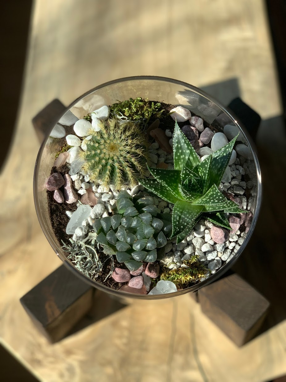 Decorative succulent terrarium