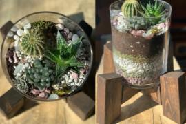 Design a Modern Living Succulent Terrarium