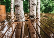 Cabin-built-around-the-existing-birch-trees-ensures-that-its-footprint-is-as-non-invasive-as-possible-40387-217x155