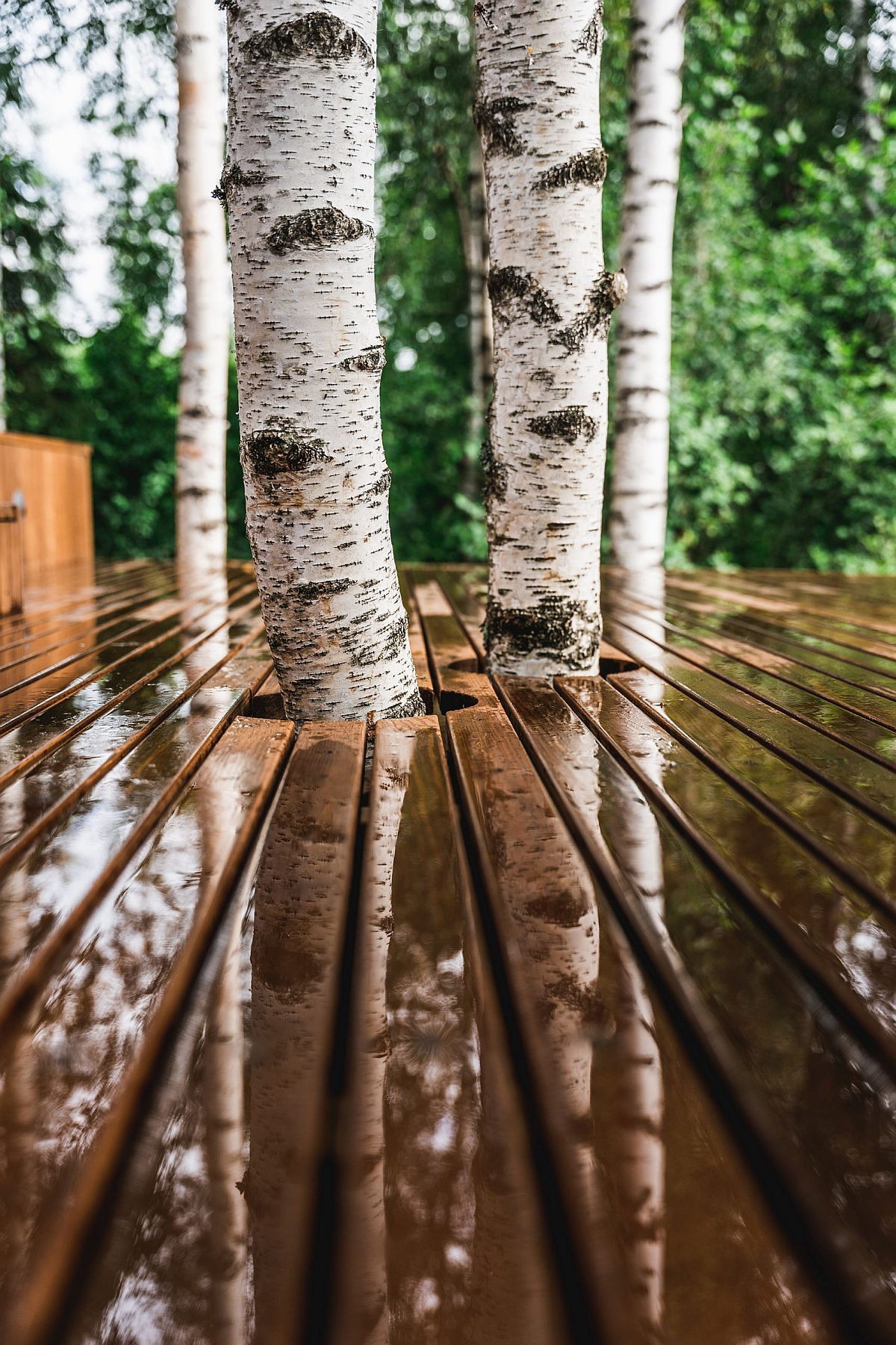Cabin-built-around-the-existing-birch-trees-ensures-that-its-footprint-is-as-non-invasive-as-possible-40387