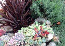 rock garden for succulents
