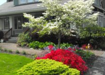 White tree with red azalea and green shrub at front lawn