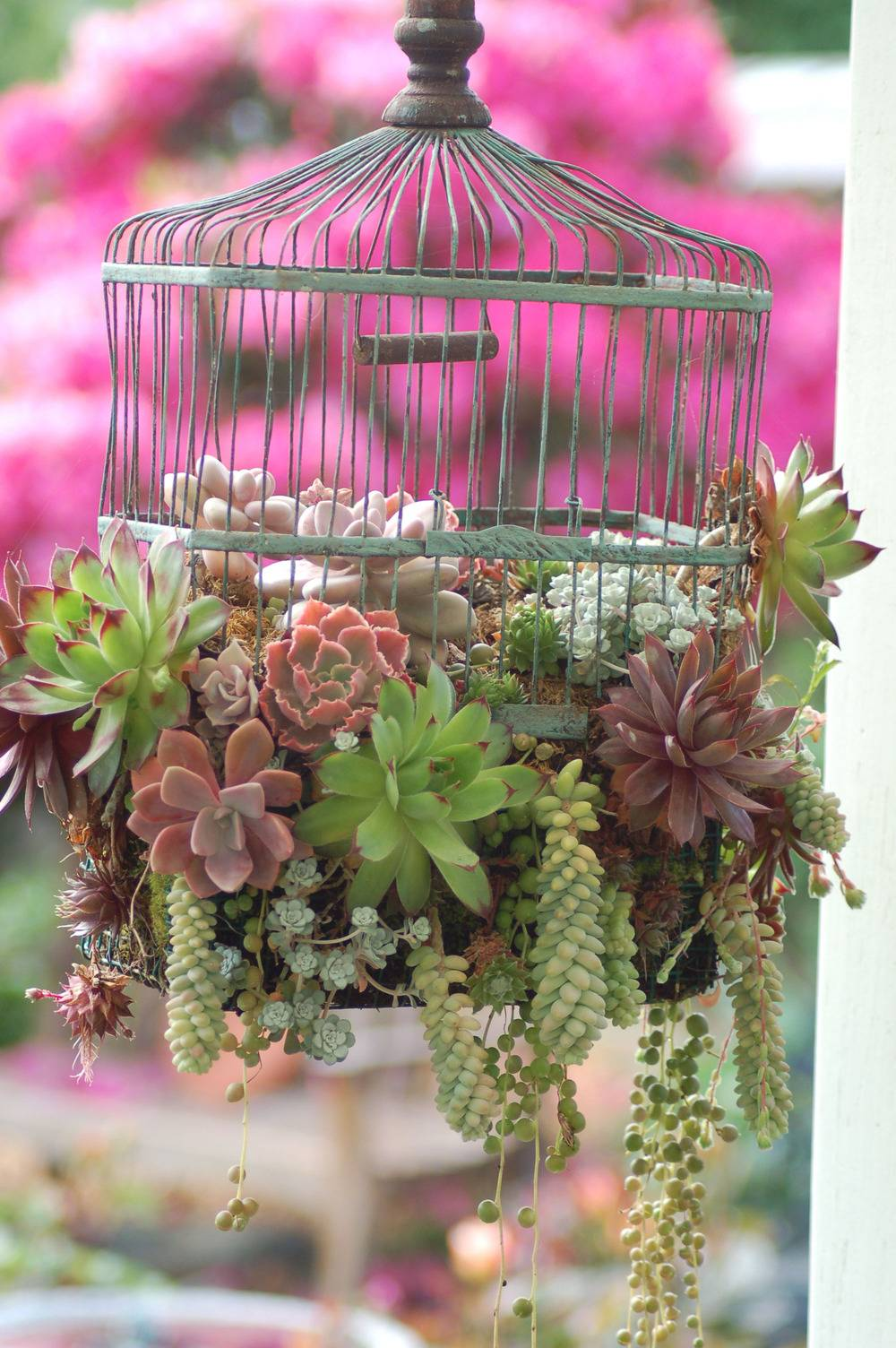 succulents hanging from cage