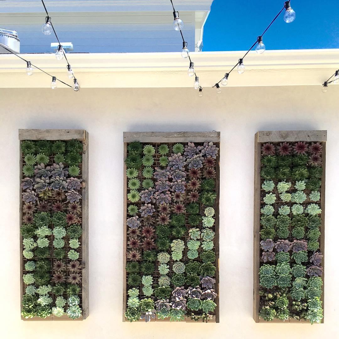 vertical succulent planter boxes