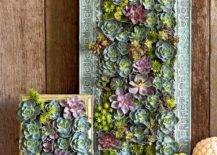 living picture frame succulent displays
