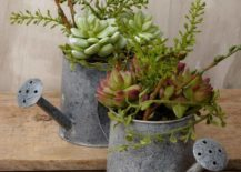 watering can succulents