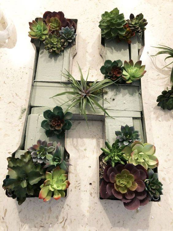 succulents in shape of letter 'H'