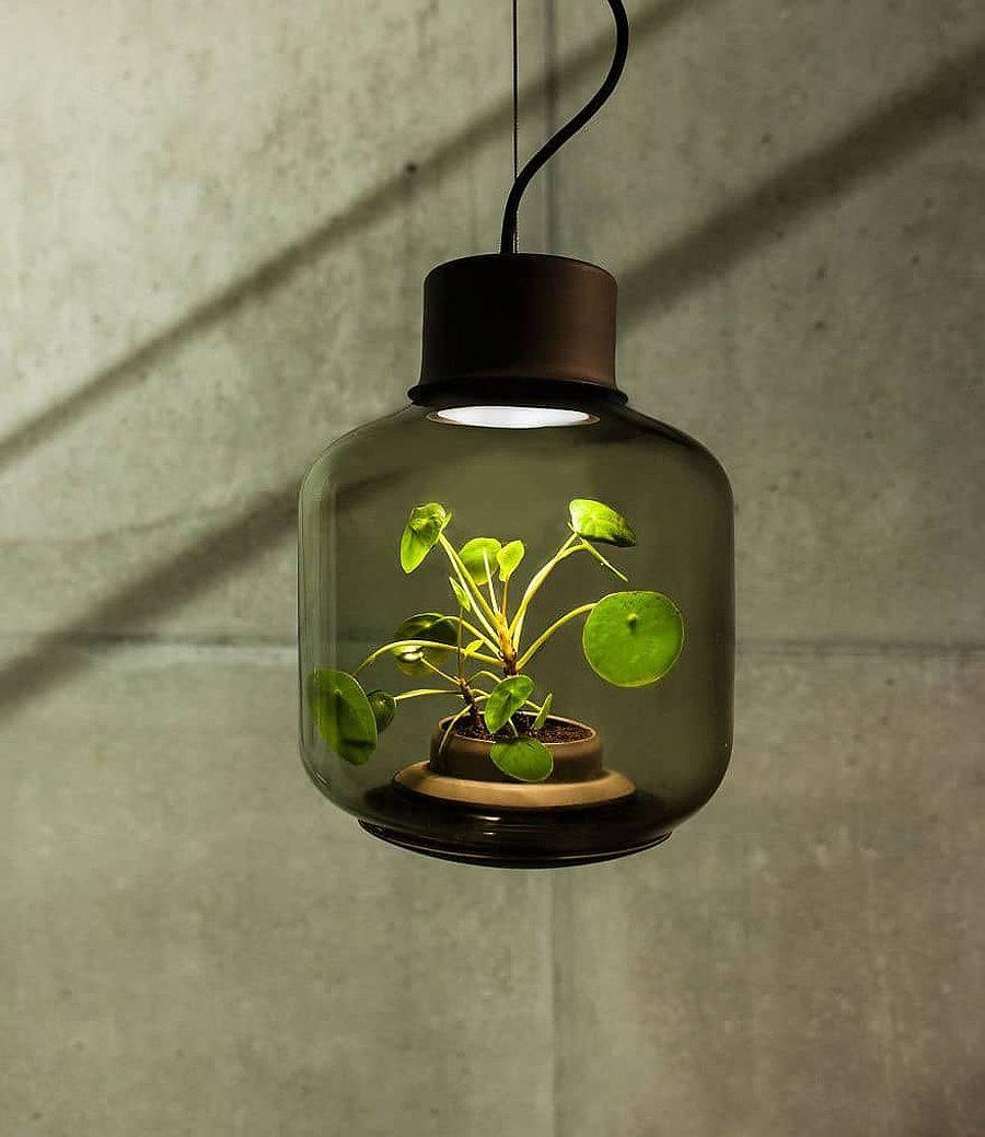 Closer look at the modern Mygdal Plantlights