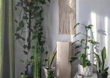 Collection of potted plants in a corner