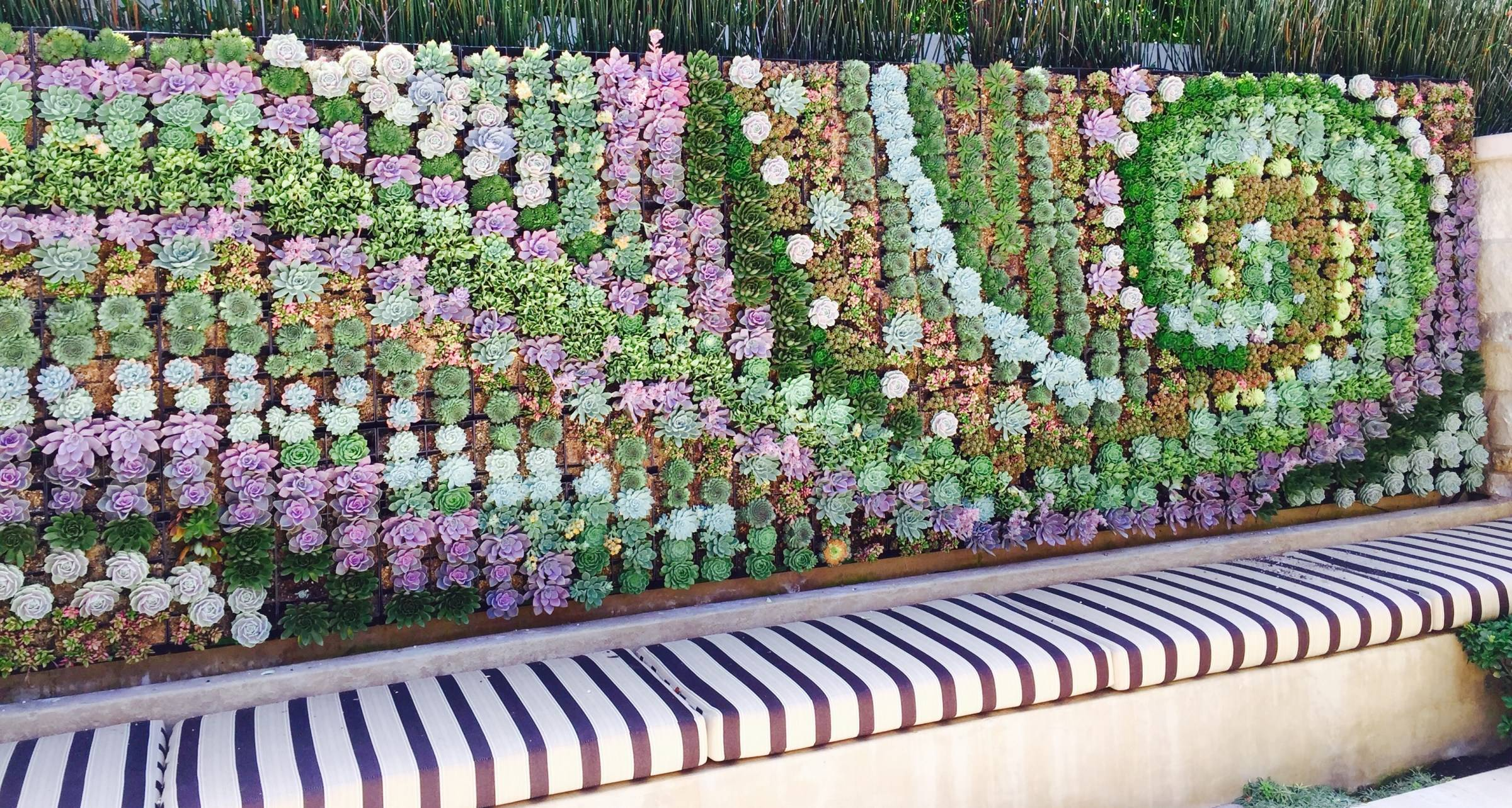 vertical succulent wall with spiral shape