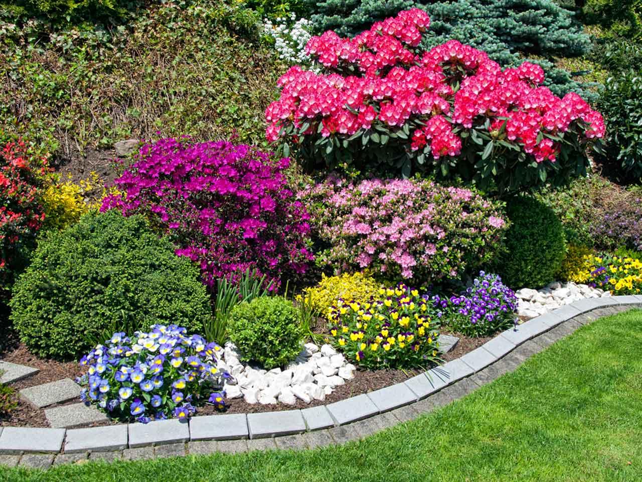 Flower Color Scheme for Backyard