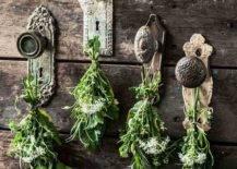 Herbs hanging on rustic door knobs