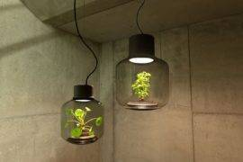 Green Lighting: Awesome Light Fixtures with Gorgeous Live Plants