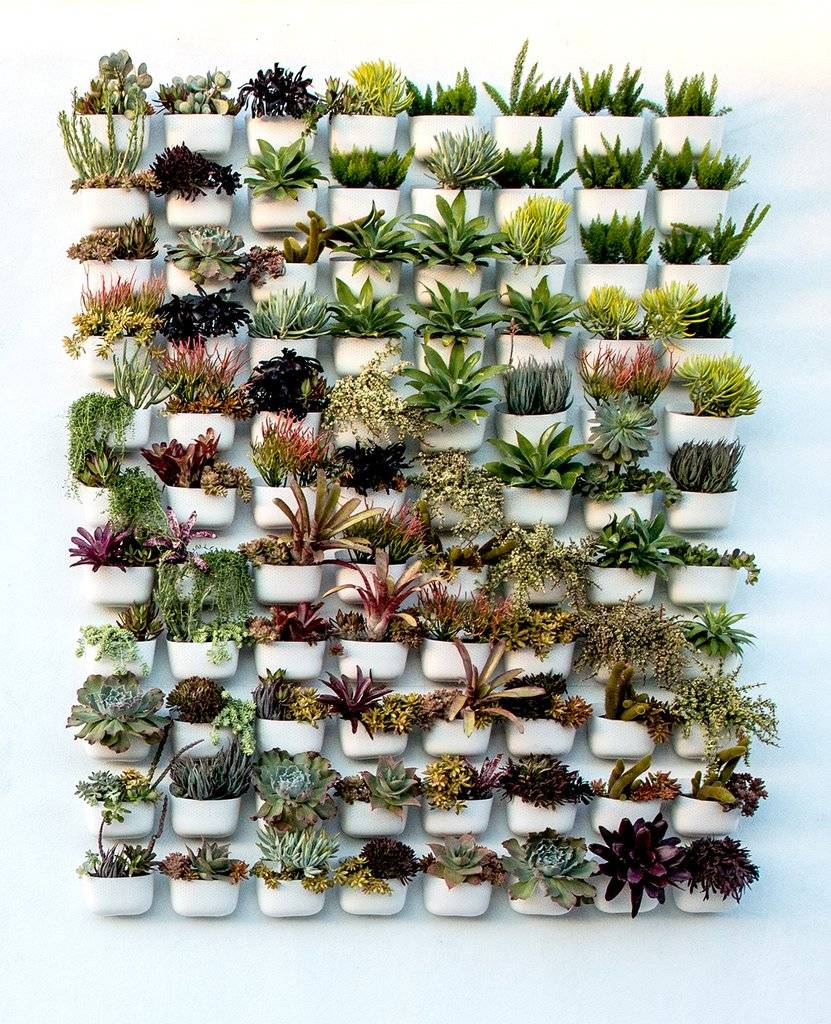 succulents hung vertically in individual white planters