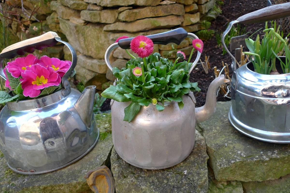Pink flowers planted on grey kettle