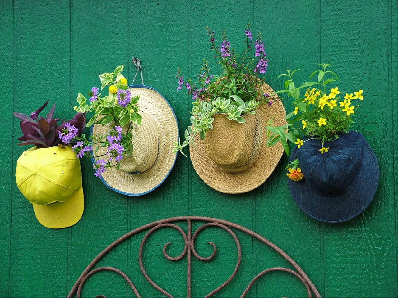 Plants on hats hanging from green wall