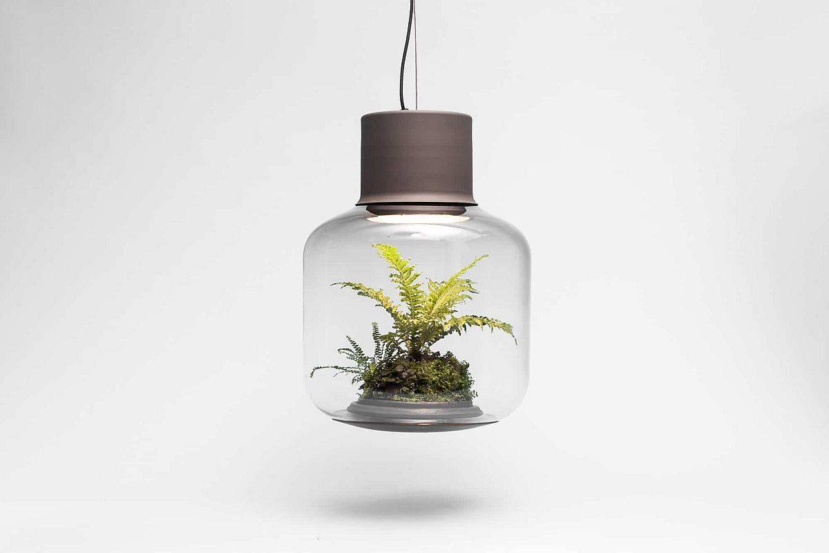 Self-sustaining eco-system inside the pendant light allows the plants to grow unattended