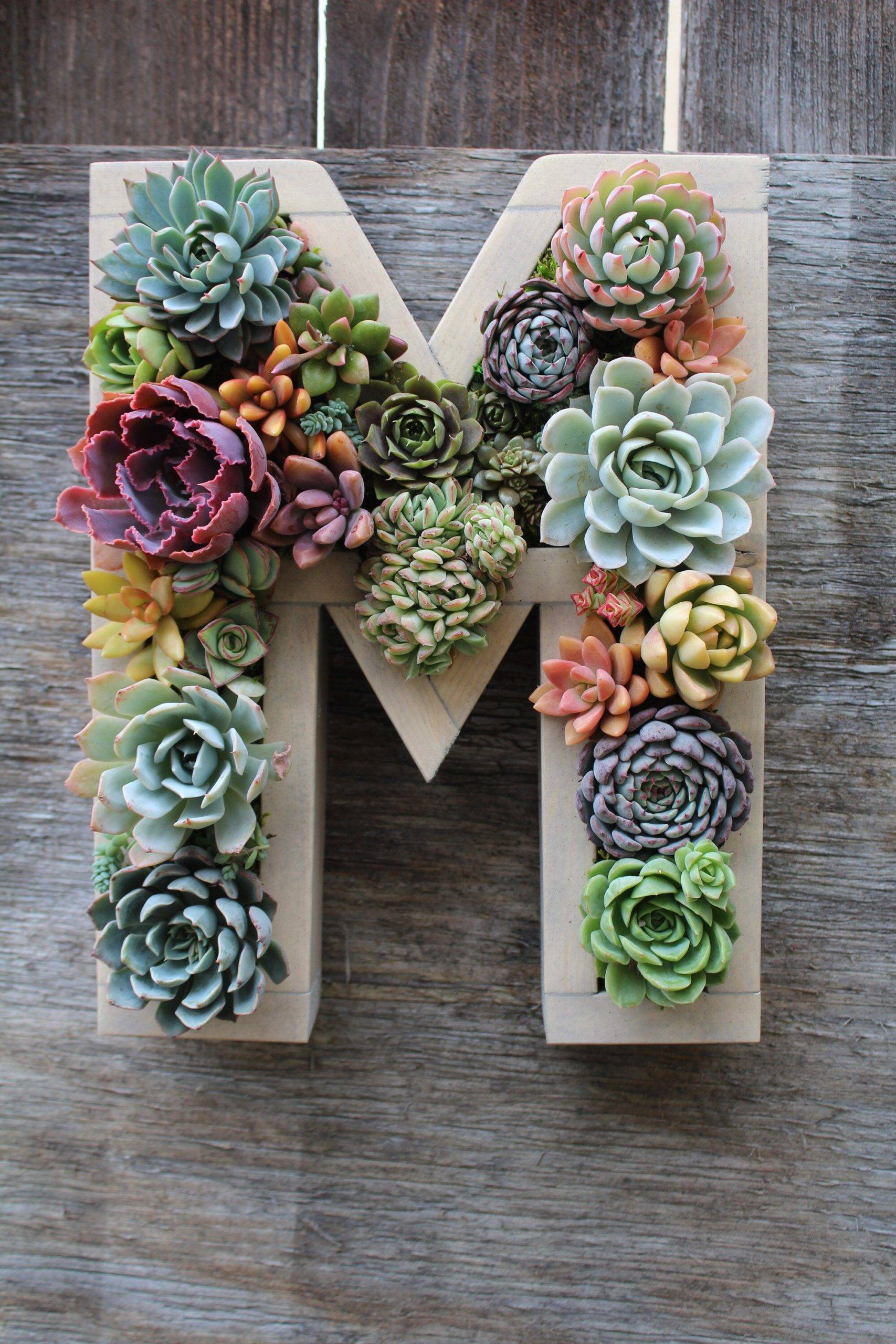 Succulent Letter Display
