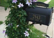 Trellis-attached Mailbox