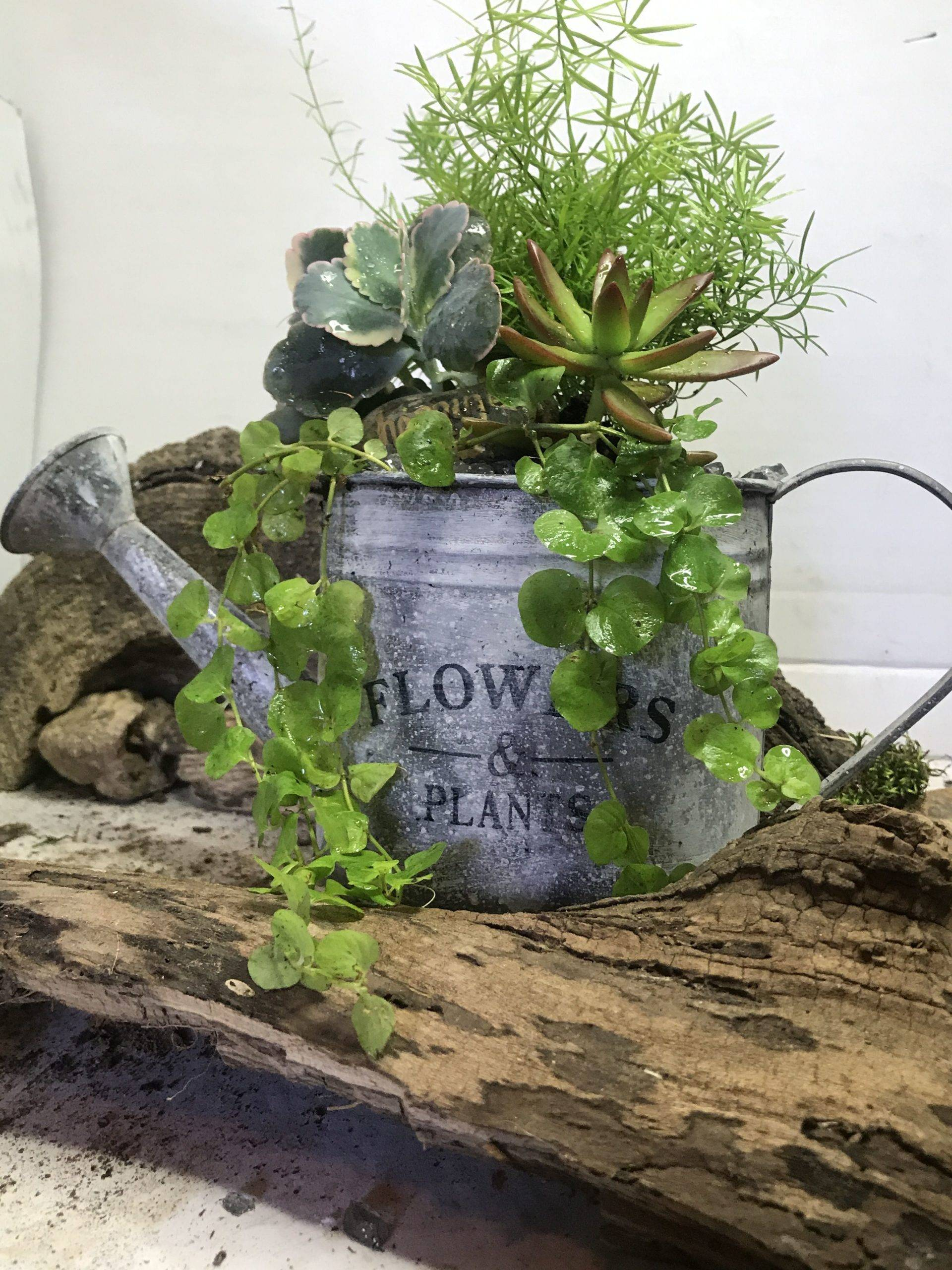 Upcycled Watering Can