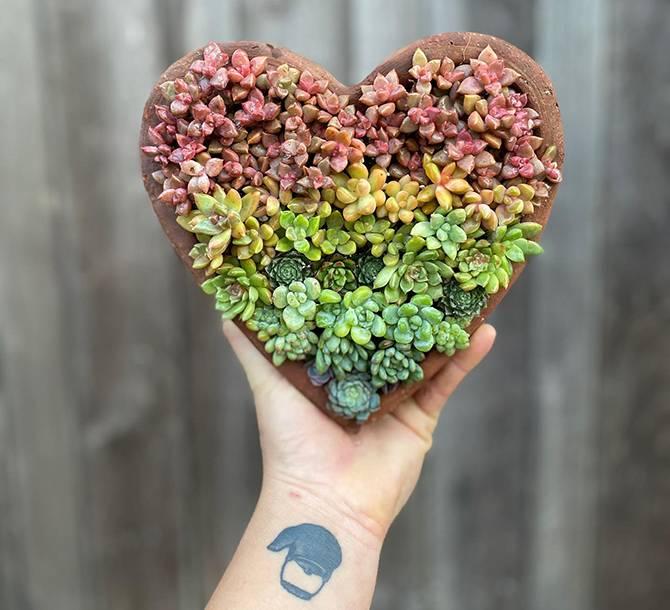rainbow succulent color gradient heart