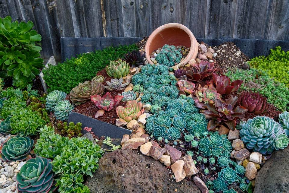 """""""tipped over"""" pot with garden of succulents leading away"""