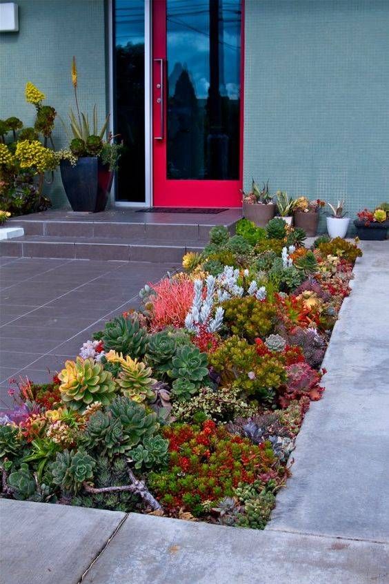 succulent house border at front entrance near red door
