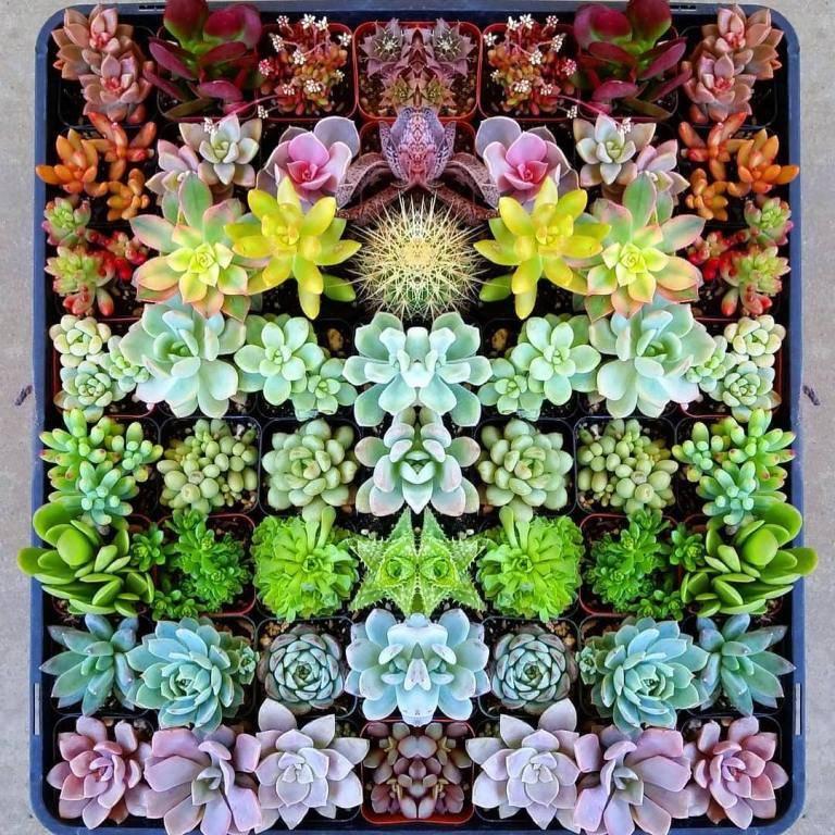 rainbow succulent planter box