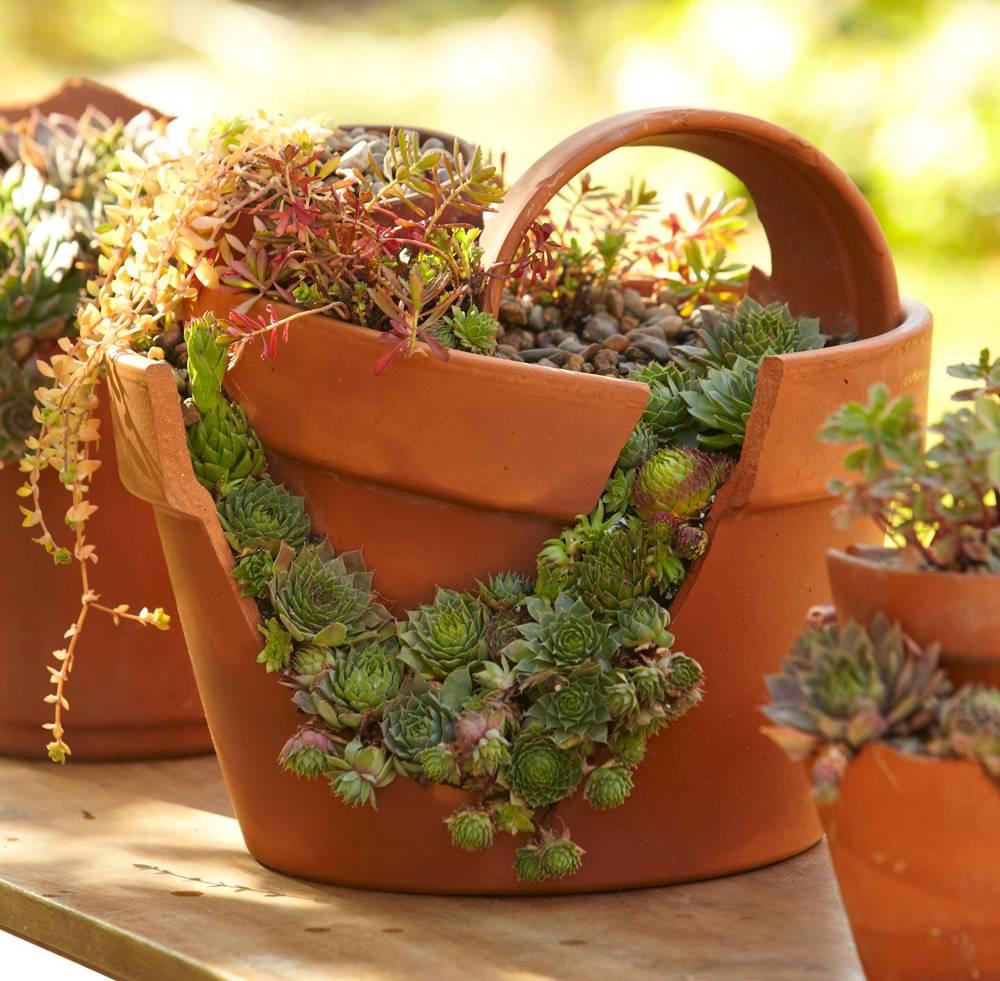 succulent garden in broken terracotta pot