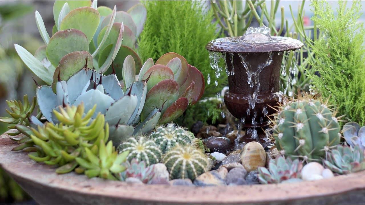 succulents surrounding water fountain