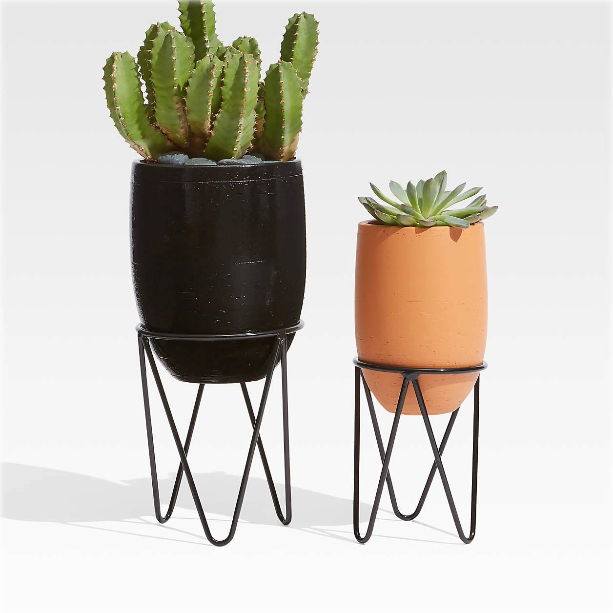 Succulents in black and brown pots