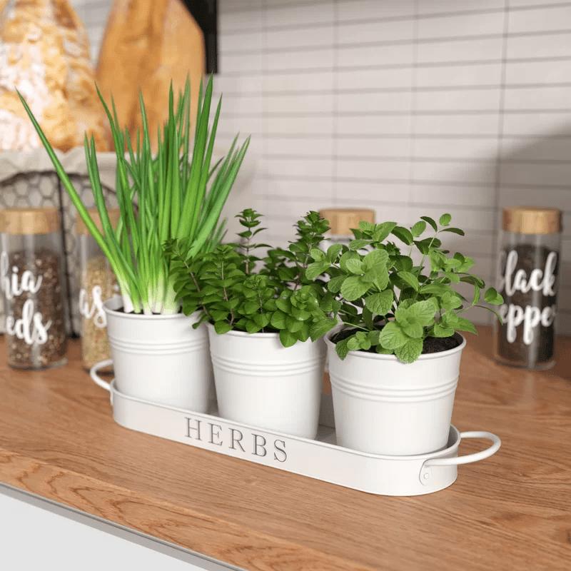 White Potted Herb Garden