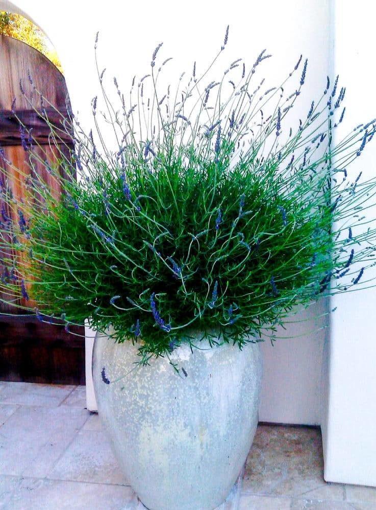 Freestanding planters.