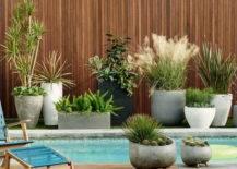 multiple planters around pool