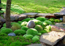 Moss As Ground Cover