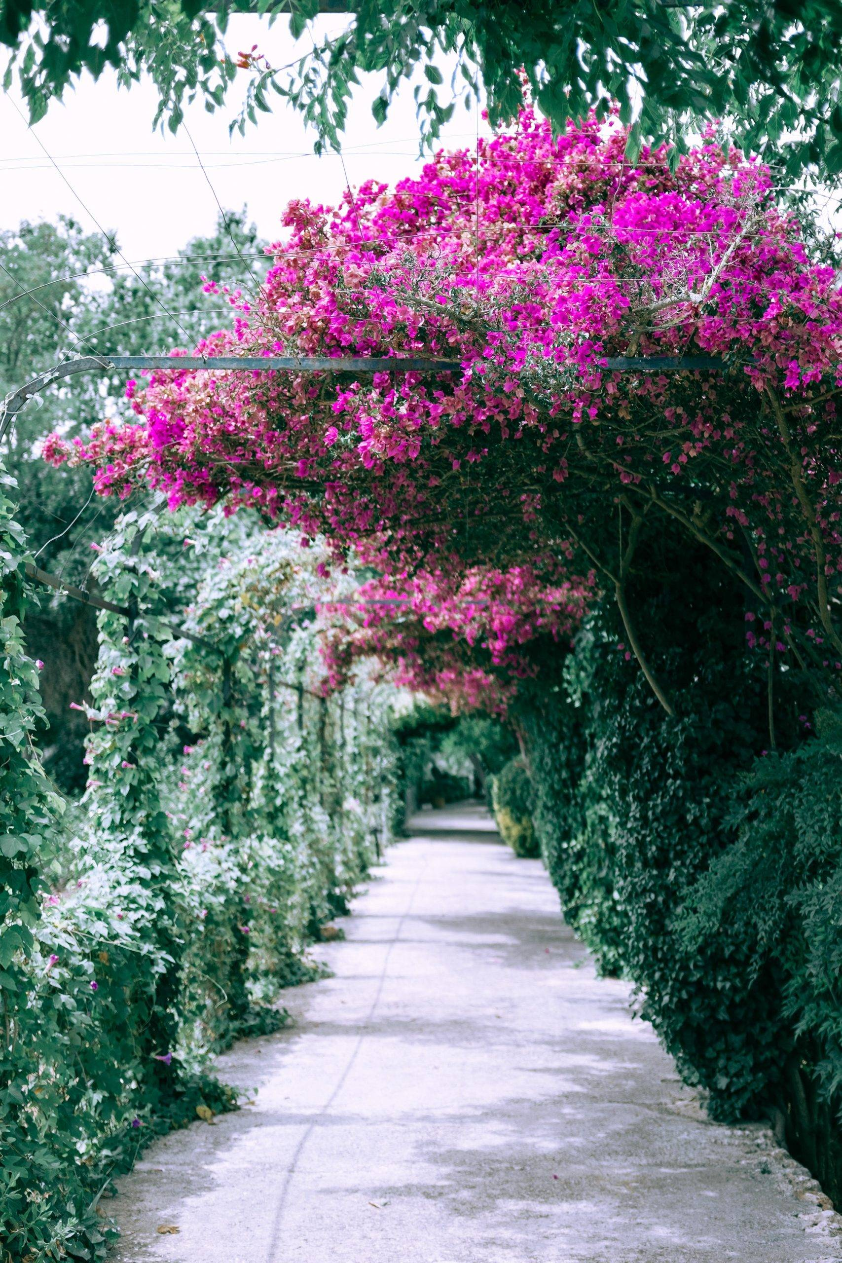 pink floral archway and stone path