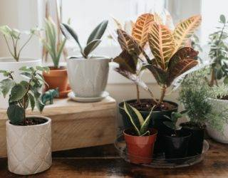 8 Best Houseplants For Beginners (Seriously!)
