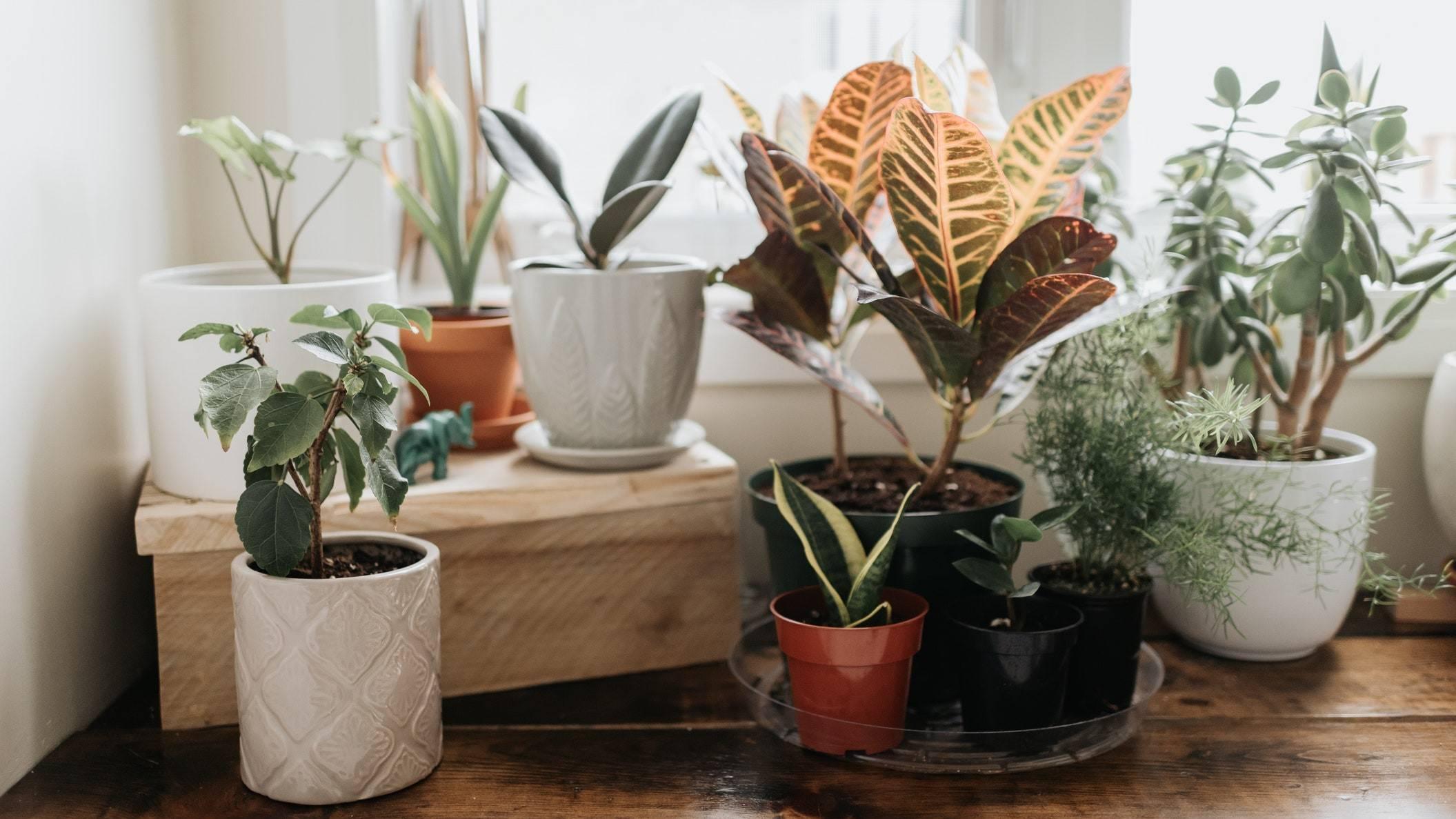multiple plants in various pots sitting along window