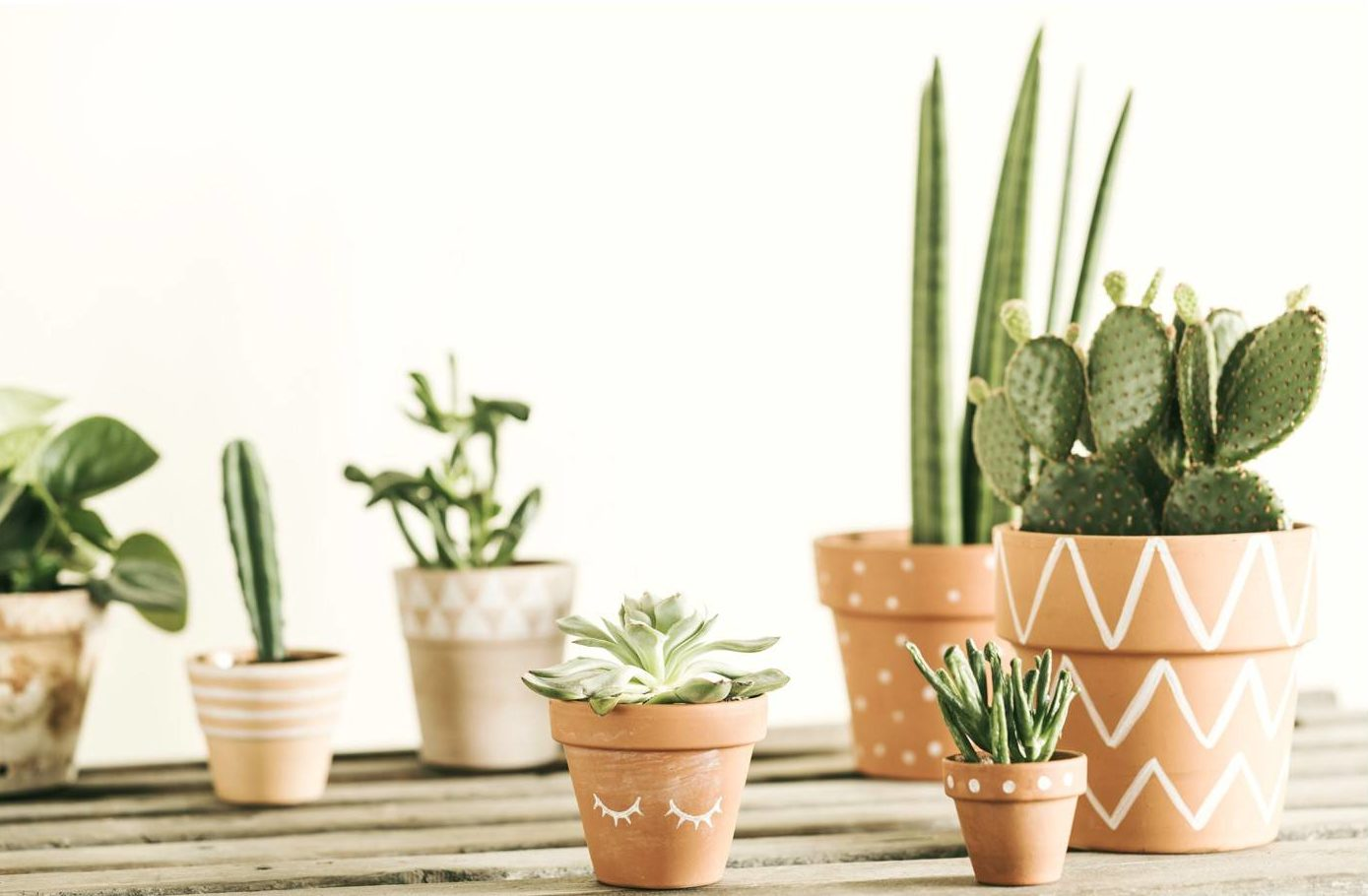 multiple cactus plants in different size clay pots